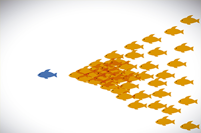 Image of fish illustrating the concept of follow the leader.