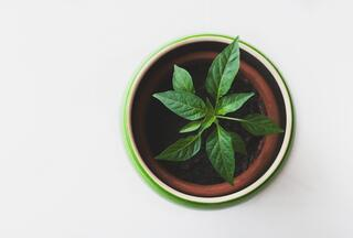 House plants, white background.